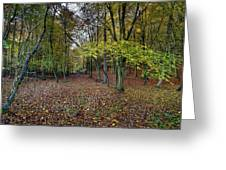 Autumn Woodland Greeting Card