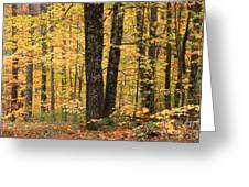 Autumn Woods 1 Greeting Card