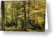 Autumn Woods II Greeting Card