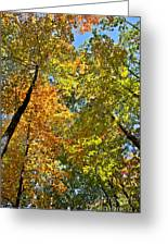 Autumn Woods Sky View Greeting Card