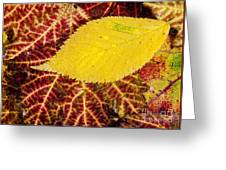 Autumn Yellow Greeting Card