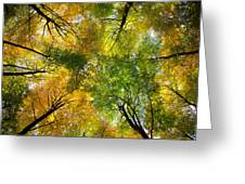 Autumnal Display Greeting Card