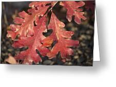 Autumnal Face Greeting Card