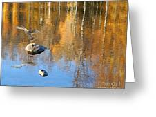 Autumnal Reflections Greeting Card