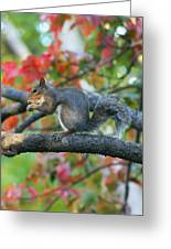 Autumnal Squirrel Greeting Card