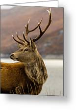 Autumnal Stag Greeting Card