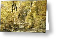 Autumnal Sunny Underwood Greeting Card
