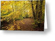 Autumnal Woodland II Greeting Card