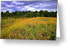 Autumns Brilliance Hdr Greeting Card