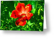 Autumn's  Flower Greeting Card