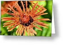 Autumn's Gerber Daisy Greeting Card