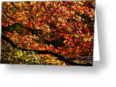 Autumn's Glory Greeting Card by Anne Gilbert