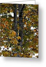 Autumn's Golden Hickory Tree Greeting Card