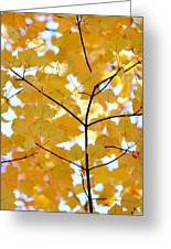 Autumn's Golden Leaves Greeting Card by Jennie Marie Schell