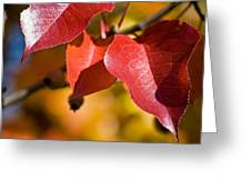 Autumn's Three Graces Greeting Card
