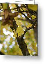 Autumn's Wondrous Colors 1 Greeting Card