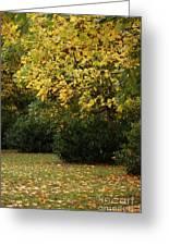 Autumn's Wondrous Colors 4 Greeting Card