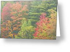 Autumntrees And Fog Greeting Card