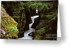 Avalanche Creek Glacier National Park Greeting Card