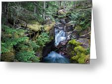 Avalanche Creek In Cedar Forest Greeting Card