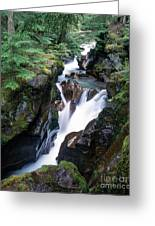 Avalanche Creek Greeting Card