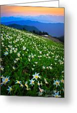 Avalanche Lily Field Greeting Card
