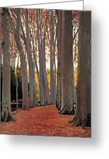 Avenue Of Plain Trees Greeting Card