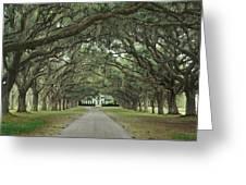 147706-avenue Of The Oaks  Greeting Card