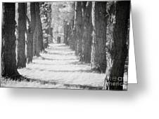 Avenue Of Trees New Zealand Greeting Card