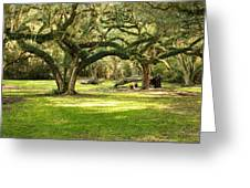 Avery Island Oaks Greeting Card