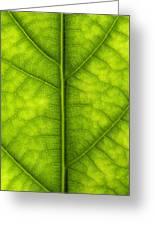Avocado Leaf Greeting Card