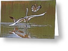 Avocets Chase Off The Egret Greeting Card