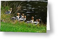 Avocets Greeting Card