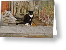 Avon Harbor Bxw Cat 9/05 Greeting Card