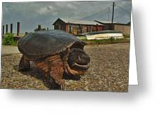 Avon Harbor Large Turtle 1 6/07 Greeting Card