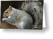 Aw Nuts Greeting Card
