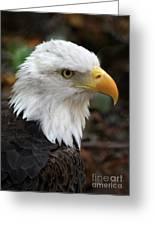 Awesome American Bald Eagle Greeting Card
