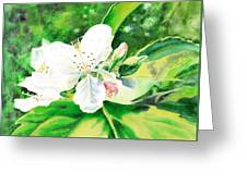 Awesome Apple Blossoms Greeting Card