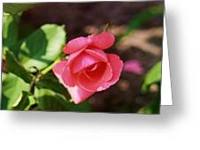 Awesome Rose Greeting Card by Victoria Sheldon