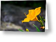 Awesome Yellow Flower Greeting Card by Jason Brow