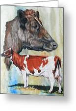 Ayrshire Cattle Greeting Card