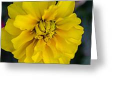 Ayz - A Yellow Zinnia Greeting Card
