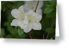 Azalea 14-2 Greeting Card