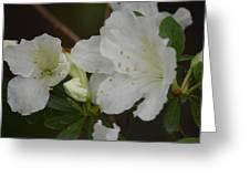 Azalea 14-4 Greeting Card