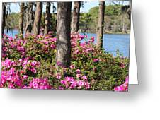 Azalea At The Lake Greeting Card
