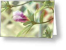 Azalea Bud 1 Greeting Card