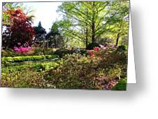 Azalea Garden Greeting Card