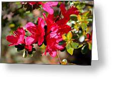 Azalea IIi Greeting Card by Aya Murrells