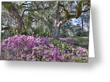 Azalea In Bloom Greeting Card
