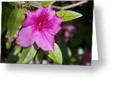 Azalea Greeting Card
